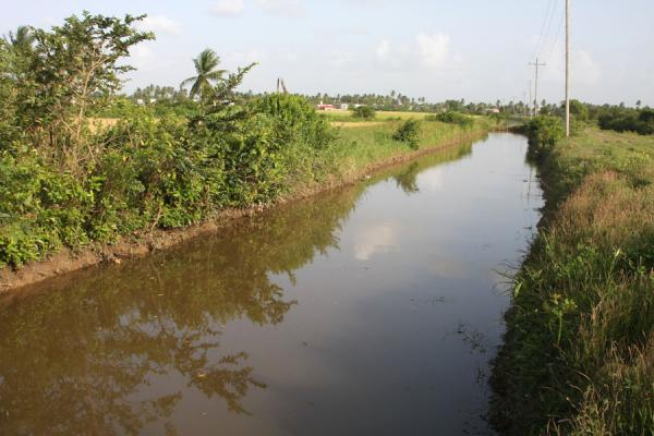 Picture of West Demerara landscape (Guyana): Canal in West Demerara