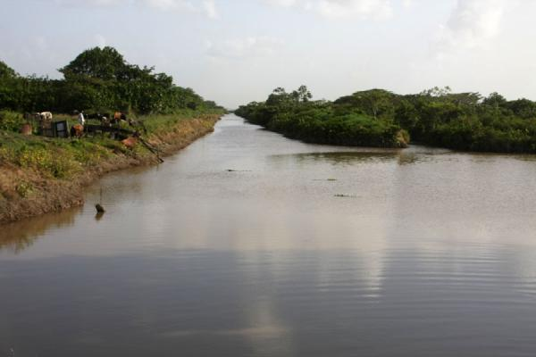 Picture of West Demerara landscape (Guyana): The landscape in West Demerara consists of many straight canals