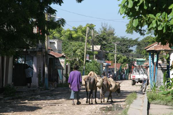 Picture of Hinche (Haiti): Man walking a street of Hinche with his donkeys