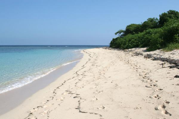 Picture of Beach and tranquil waters of Ile à Rats - Haiti - Americas