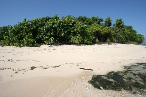 Foto de White sand and green trees on Ile à RatsIle à rats/Paradis - Haití