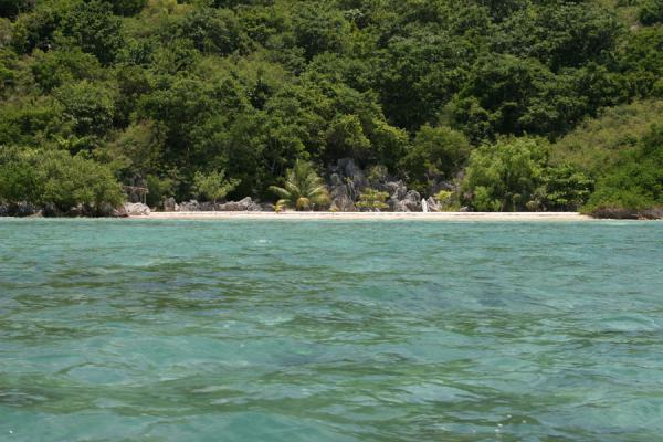 Picture of White strip of beach in a green forest in the bay of Cadras - Haiti - Americas