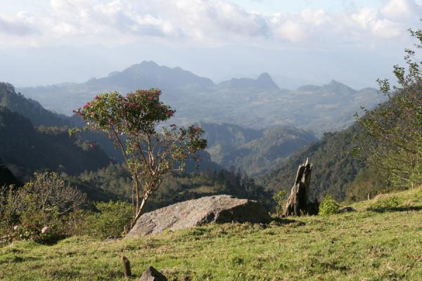Picture of Mount Celaque: looking towards Cimís Montaña - Honduras - Americas