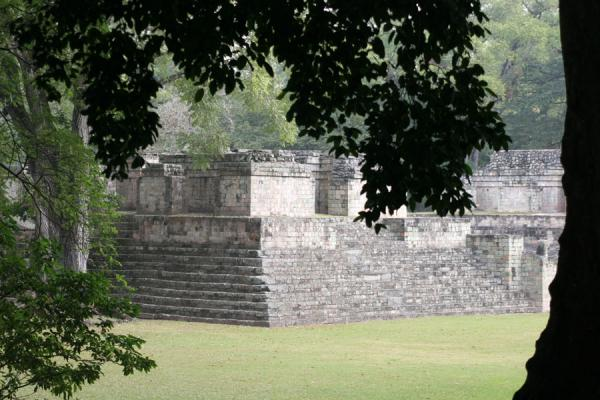 Picture of Copán: looking at structure 9 through the trees