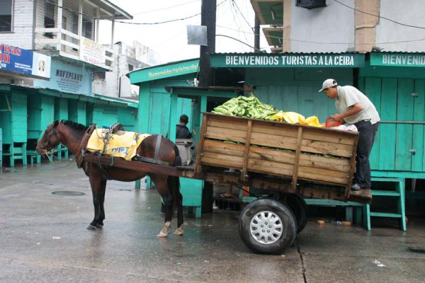 Foto de La Ceiba: preparing to unload fruit in the market - Honduras - América