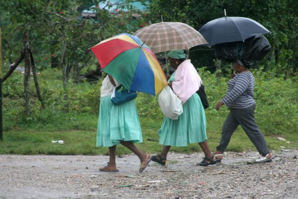 Picture of Limón (Honduras): Limón: seeking shelter with an umbrella