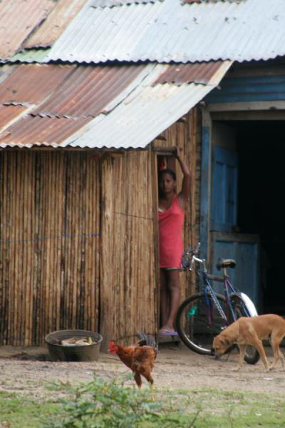 Picture of Limón (Honduras): Limón: streetscene with woman, chicken, and dog