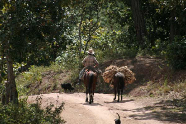 Picture of Sierra del Merendon (Honduras): Man riding horse on the way to San Agustín