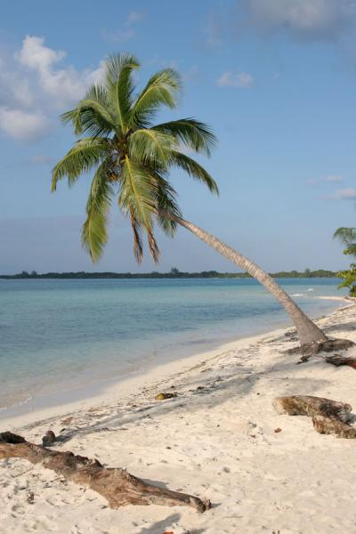 Foto de Water Key: palm tree at the white beach - Honduras - América