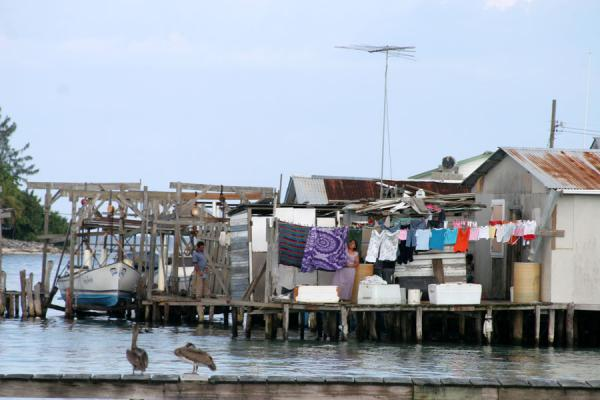 Foto di Pigeon Key: coastline with houses - Honduras - America