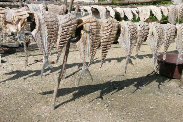 Picture of Suc Suc Key: fish hanging to dry