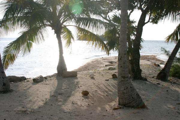 Palm trees against the sun on Water Key | Cayos de Utila | Honduras