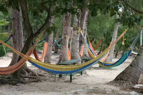 Foto de Hammocks at the beachUtila - Honduras