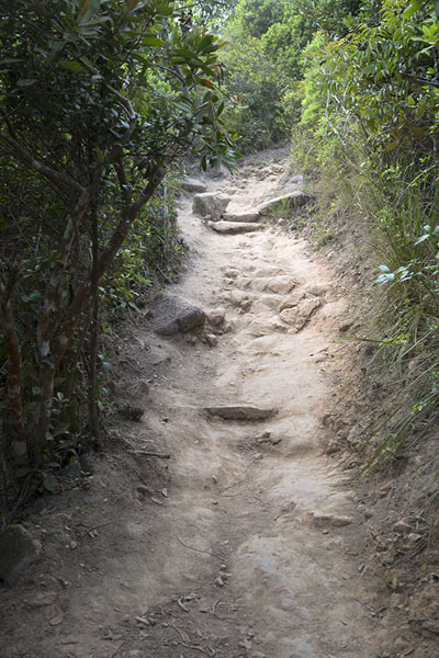 Foto van Trail running through the forest - Hong Kong - Azië