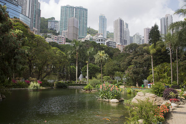 Picture of Skyscrapers looming over a lake in Hong Kong park - Hong Kong - Asia