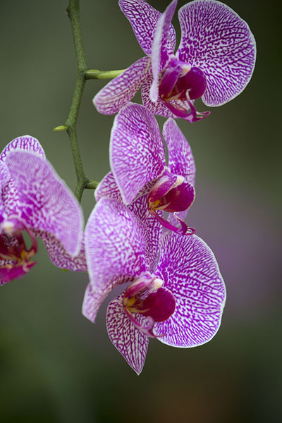 Foto van Orchids in the greenhouse of Hong Kong parkHong Kong Park - Hong Kong