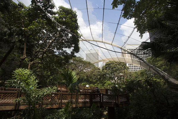 Foto di A wooden walkway leads through the trees at Edward Youde aviary - Hong Kong - Asia