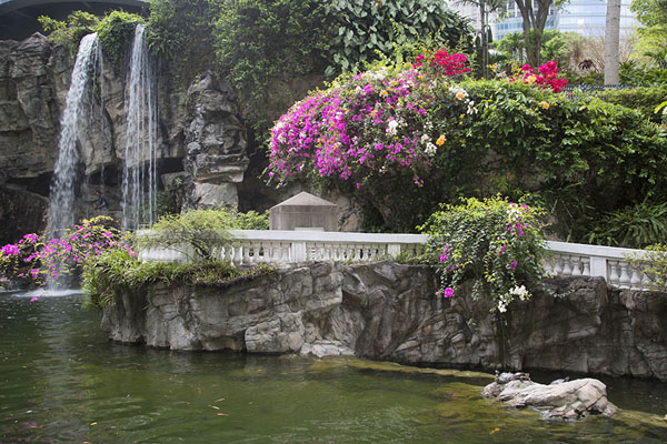 Flowers and a waterfall in the park | Hong Kong Park | Hong Kong
