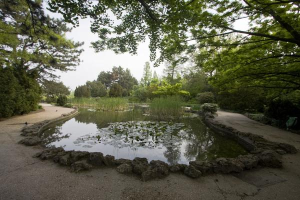Pond in the Japanese Garden | Margit eiland | Hongarije