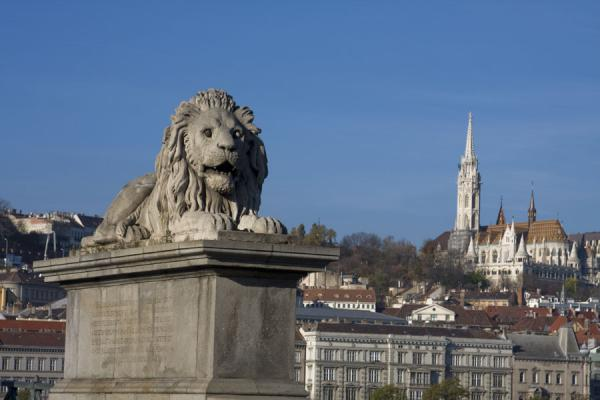 One of the lions of Széchenyi chain bridge with Matthias church in the background | Széchenyi pont à chaînes | Hongrie