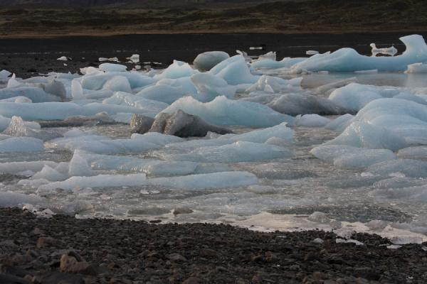 Picture of Small icebergs in a corner of FjallsárlónFjallsárlón - Iceland
