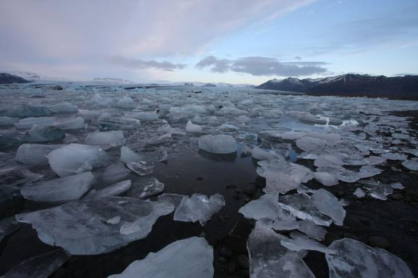 Picture of Small chunks of ice everywhere at the shore of JökulsárlónJökulsárlón - Iceland