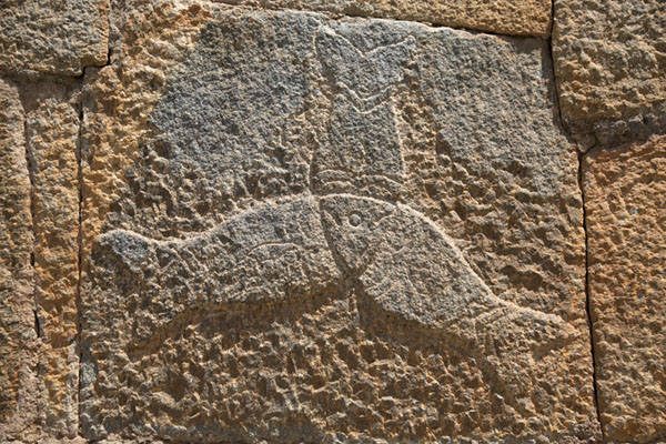 Foto di Detail of fish carved out of the sturdy walls of Bangalore FortBengaluru - India