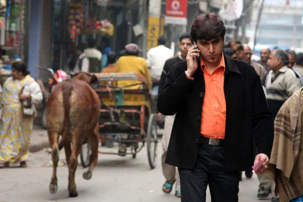 Picture of On the phone and cow in Chawri Bazaar