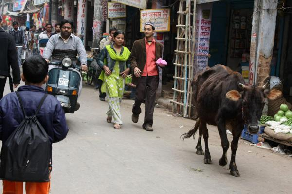 Foto van Cow and people in Chawri BazaarChawri Bazaar - India