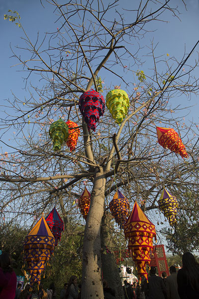 Decorative lanterns in a tree | Garden of Five Senses | Inde