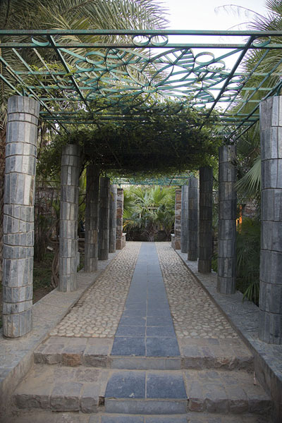 Aisle covered by plants in the Garden of Five Senses | Garden of Five Senses | India