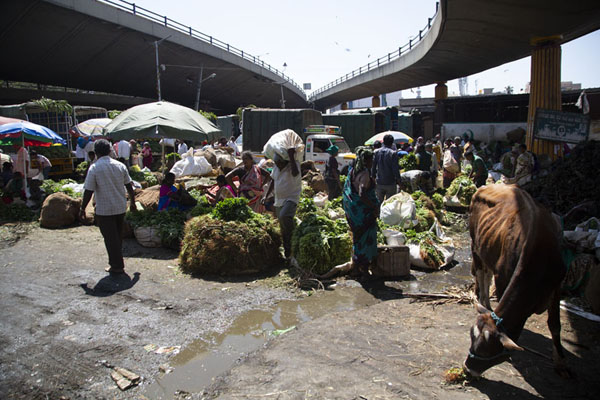 Street stalls under flyovers at KR market | Krishnarajendra markt | India