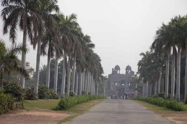 Palm-tree lined path leading south to Humayun Gate | Purana Qila | India