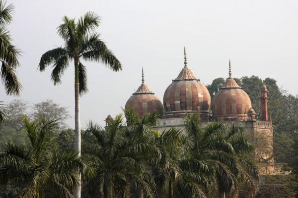 Picture of Domes and palm trees at Safdarjung Tomb