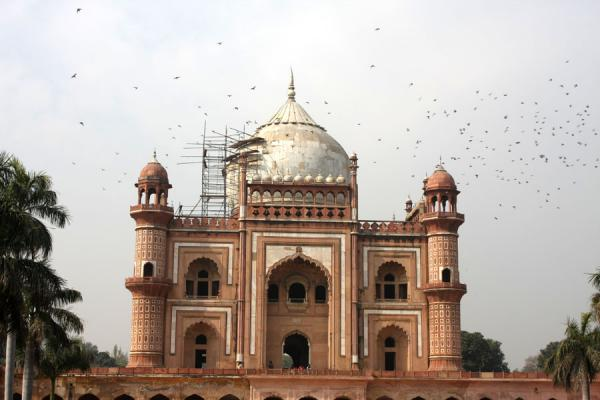 Cloud of birds circling around Safdarjung Tomb | Safdarjung Tomb | India