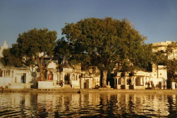 Picture of Udaipur (India): Buildings and tree reflected in the waters of Udaipur