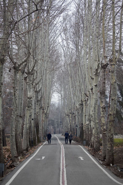 Foto van Tree-lined lane on the Sa'd Abad Museum Complex groundsTeheran - Iran