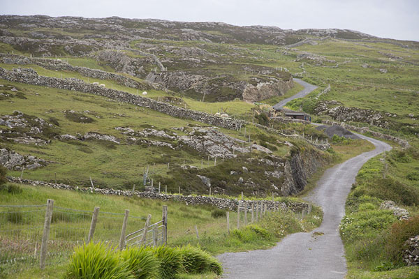 Foto van Road near Cloonamore on the east side of InishbofinInishbofin - Ierland