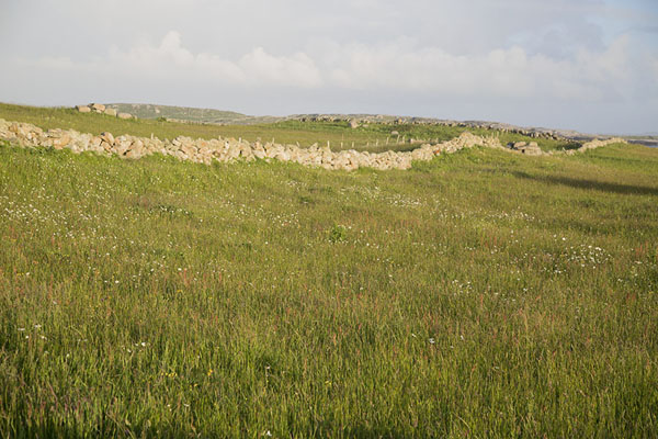 Photo de One of the many stone walls dividing property on Omey IslandOmey Island - Irlande