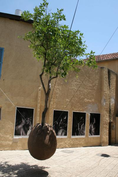 Hanging tree on a small square with photo exhibition | Jaffa | Israel
