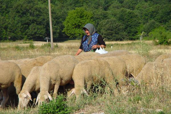 Picture of Abruzzo Landscape (Italy): Shepherd with lambs, Abruzzo