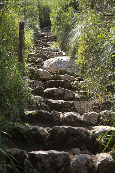Photo de The stone steps leading down the canyonCava Grande del Cassibile - l'Italie