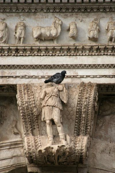 Pigeon on a sculpture of the Arch of Titus | Forum Romanum | Italy