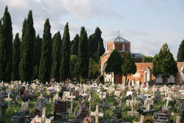 Picture of San Michele cemetery: part of the cemetery with cipress trees