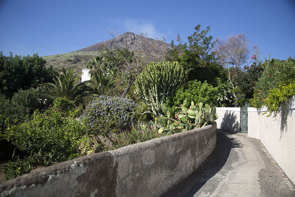 Street with flowers and Stromboli volcano in the background | Stromboli village | Italy