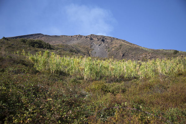 Looking up Stromboli volcano with vegetation and smoke | Stromboli | Italy
