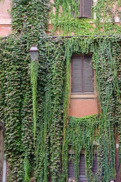 Typical house in Trastevere with hanging plants | Trastevere | Italy
