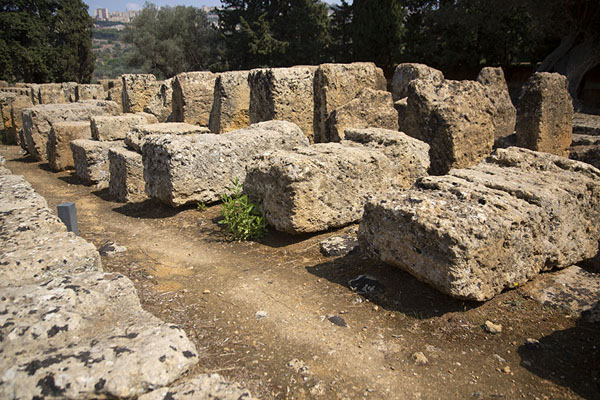 The ruins of the alter of the Temple of Zeus - 意大利 - 欧洲