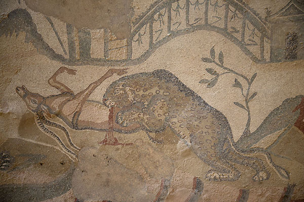 Detail of the great hunting scene mosaic: a big cat killing a deer | Villa Romana del Casale | Italië