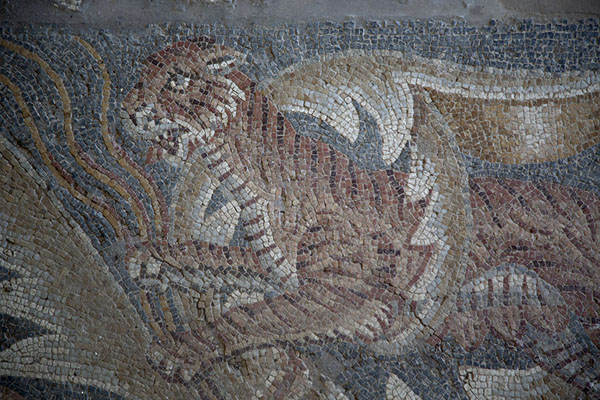 Fierce tiger in the bottom part of the Hector mosaic | Villa Romana del Tellaro | Italy